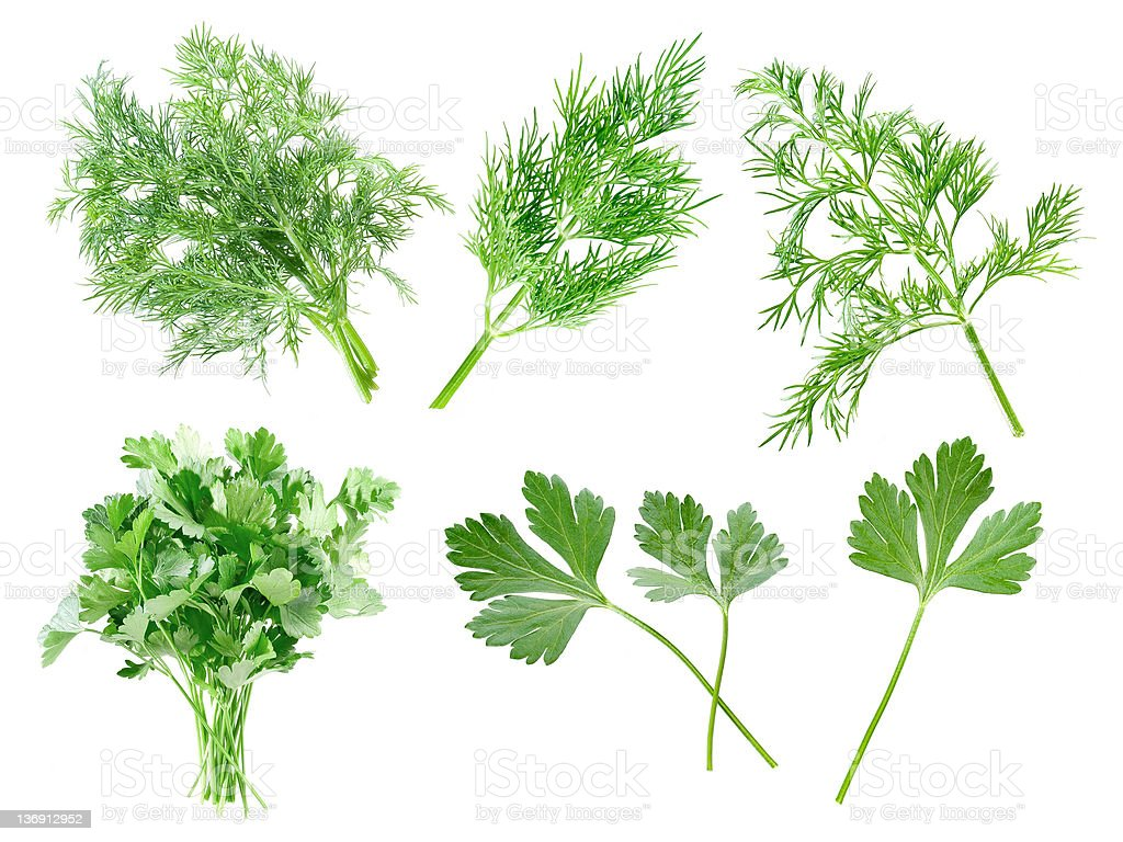 Parsley and dill. royalty-free stock photo