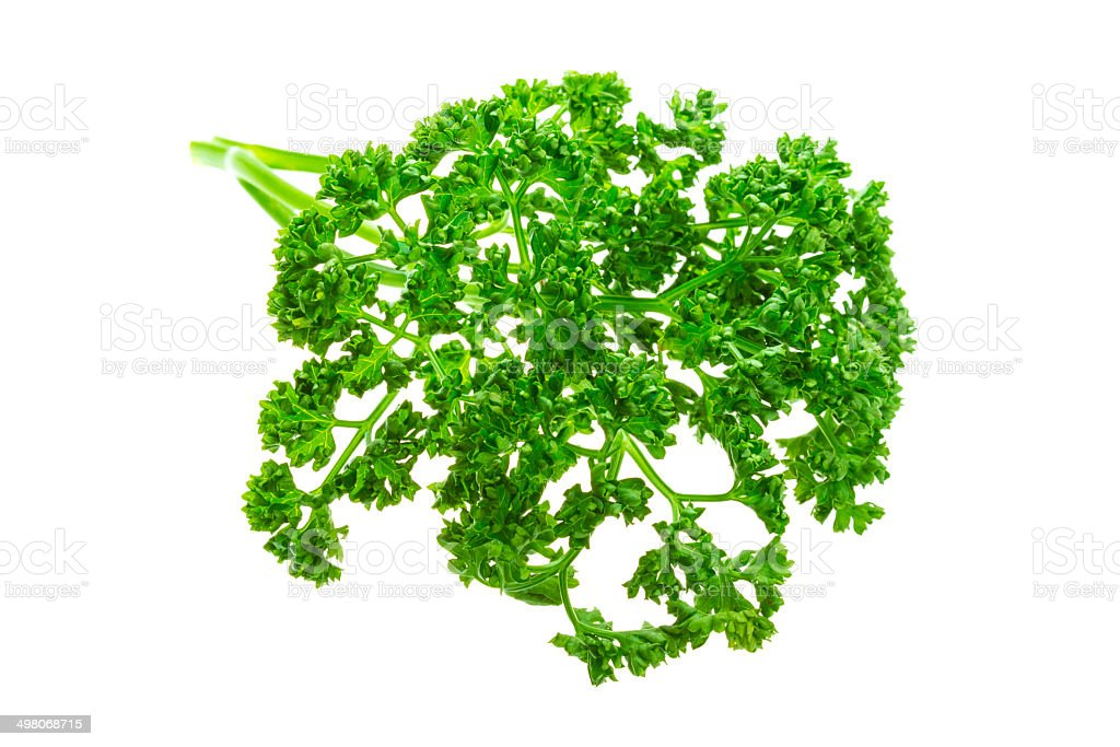 Parsley branch royalty-free stock photo
