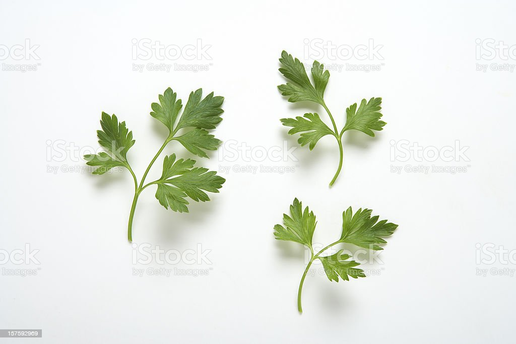Parsley branches stock photo