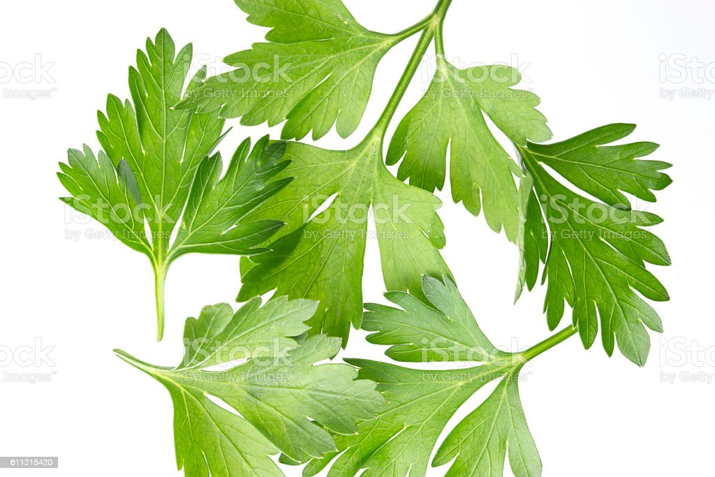 Parsley bunch isolated on white, top view stock photo