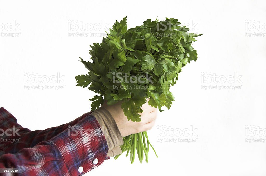 Parsley for you royalty-free stock photo