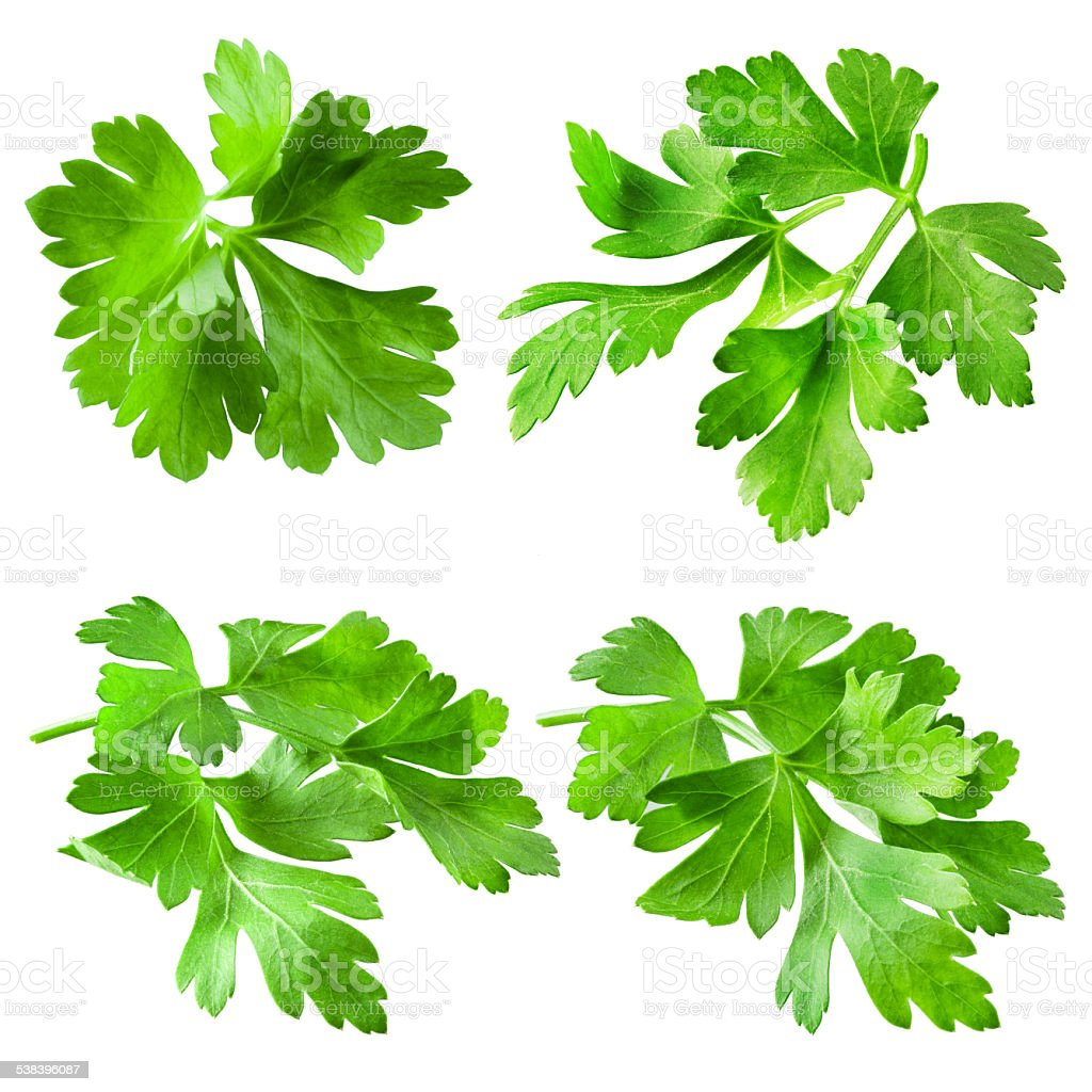 Parsley isolated on white background. Collection stock photo