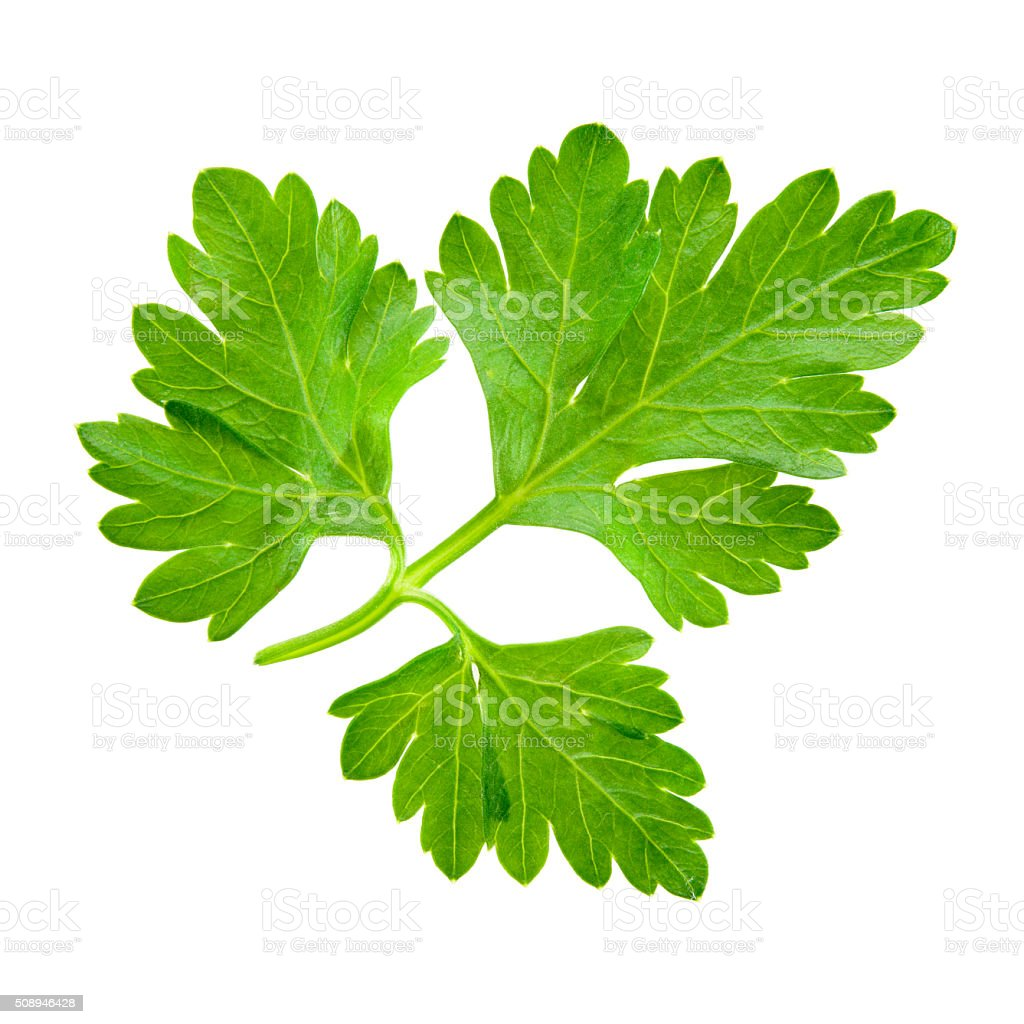 Parsley isolated on white background. stock photo
