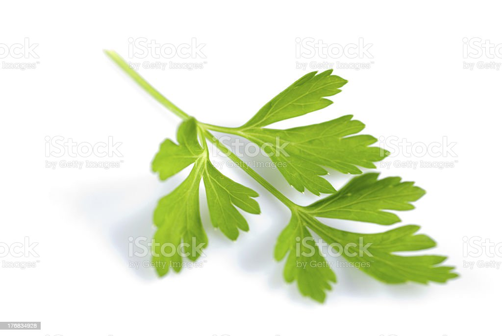 Parsley isolated royalty-free stock photo
