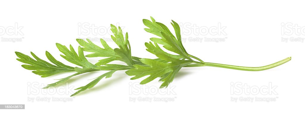 Parsley leaf royalty-free stock photo