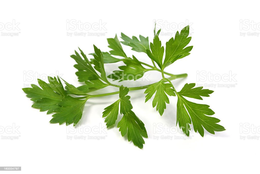 Parsley leaf stock photo