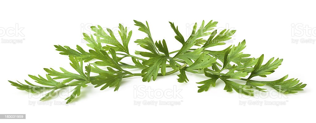 Parsley leafs royalty-free stock photo