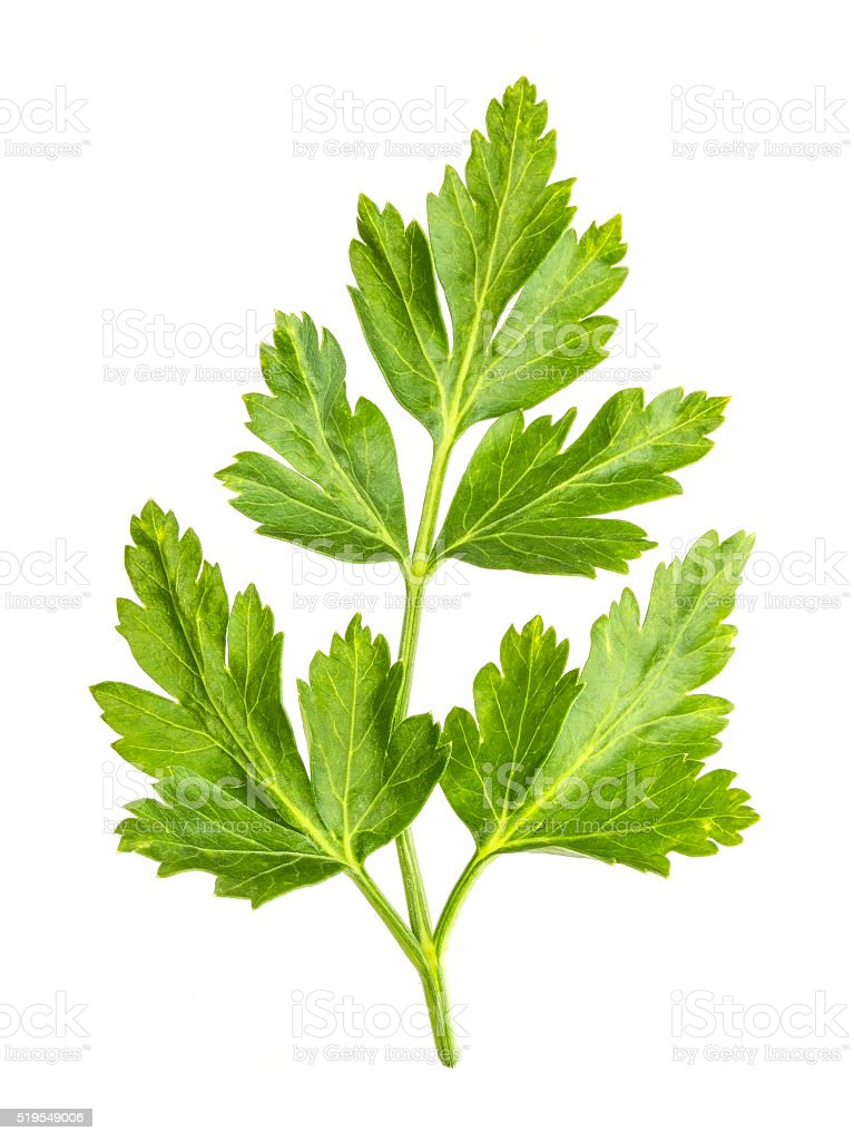Parsley leaves isolated on white background. Close up stock photo