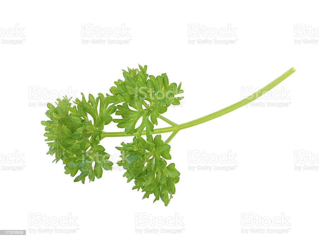 Parsley on white royalty-free stock photo