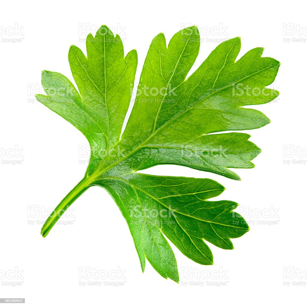 Parsley. one leaf isolated on white background. stock photo