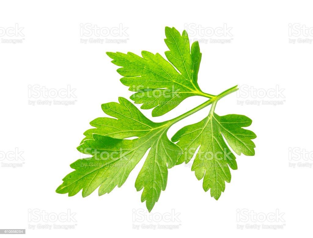 Parsley. One leaf isolated on white background stock photo