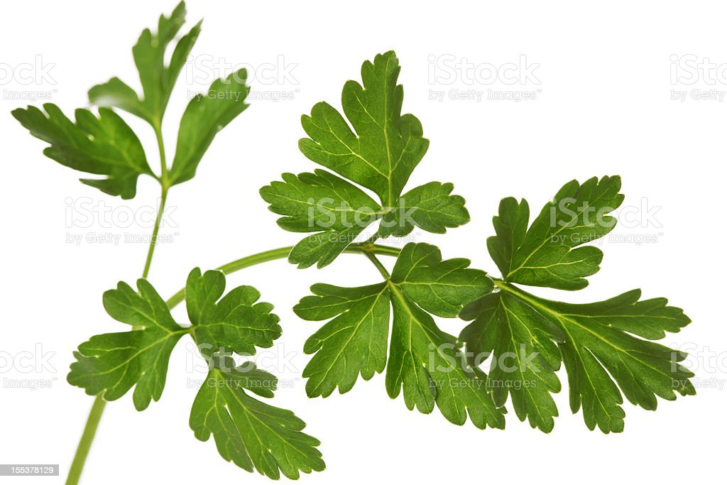 Parsley royalty-free stock photo