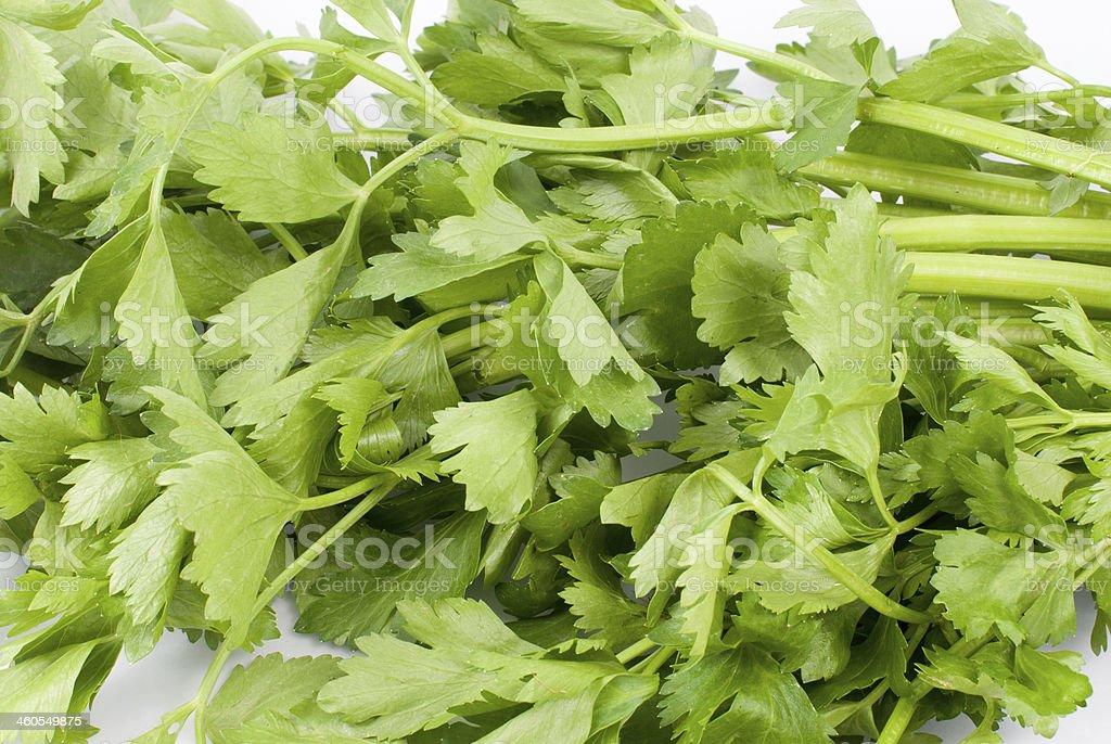 parsley stock photo