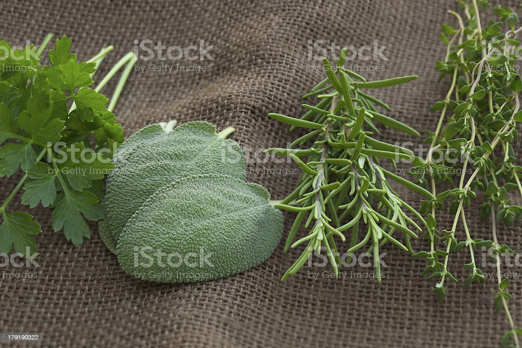 Parsley, sage, rosemary and thyme herbs on burlap royalty-free stock photo