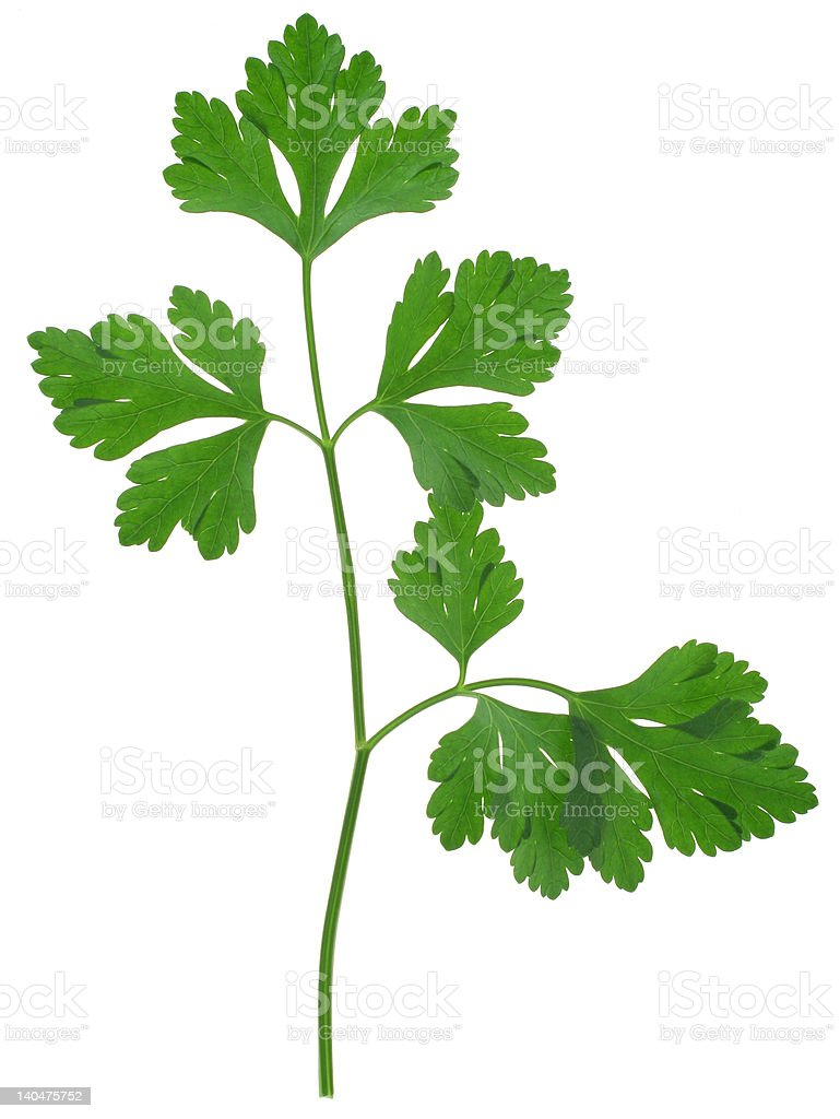 parsley sprig royalty-free stock photo