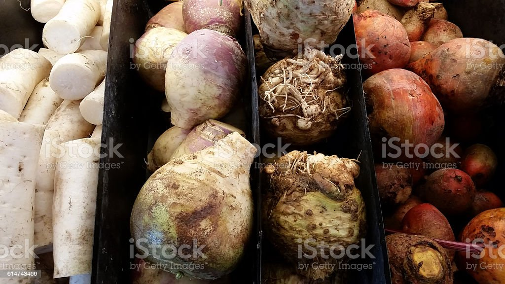 Parsnips, turnips, beet and root vegetables stock photo
