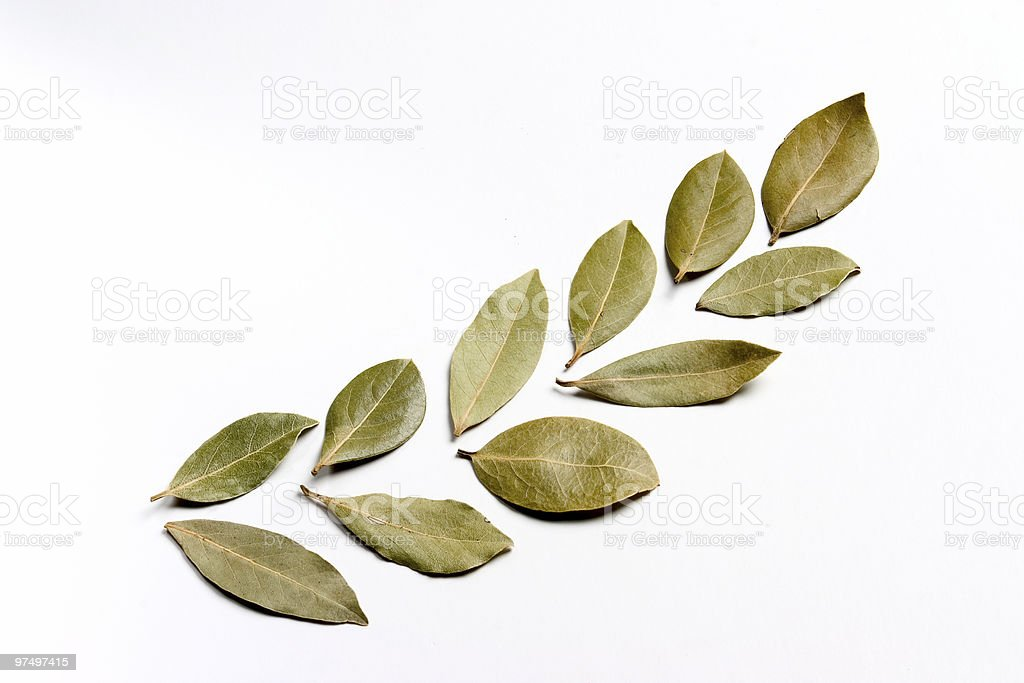 Part of a laurel wreath royalty-free stock photo