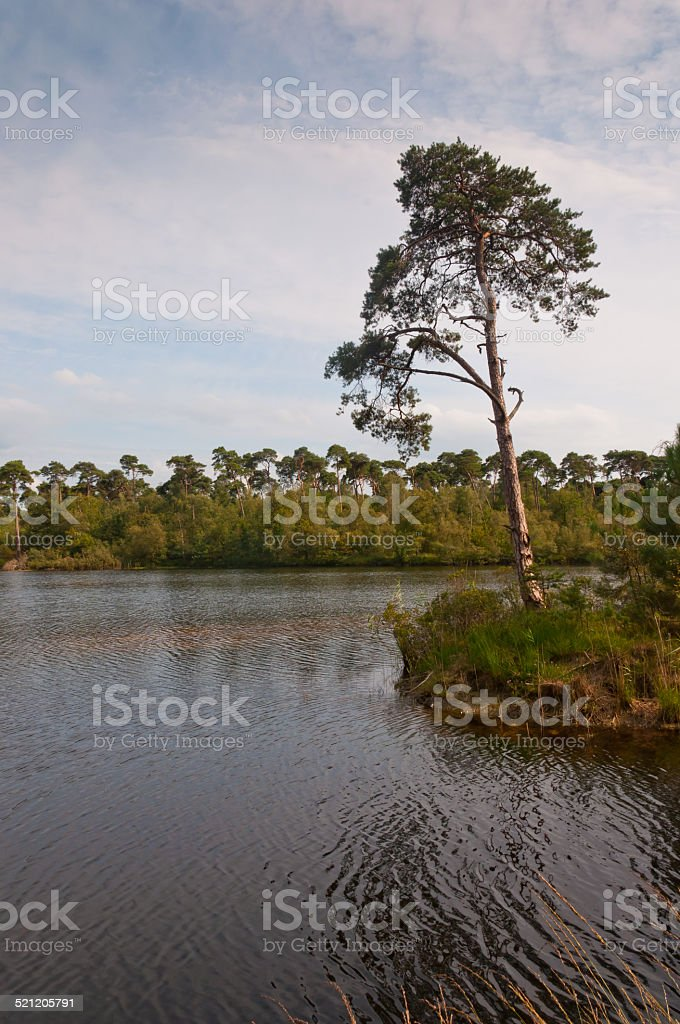Part of a small island in a Dutch lake stock photo