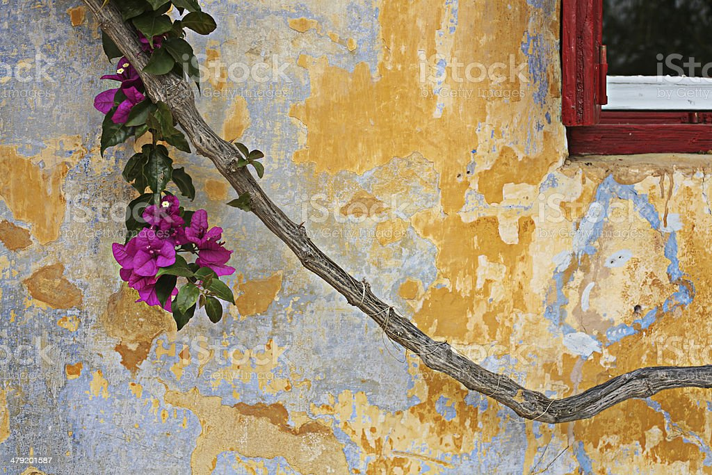 Part of an old wall, window and a plant royalty-free stock photo
