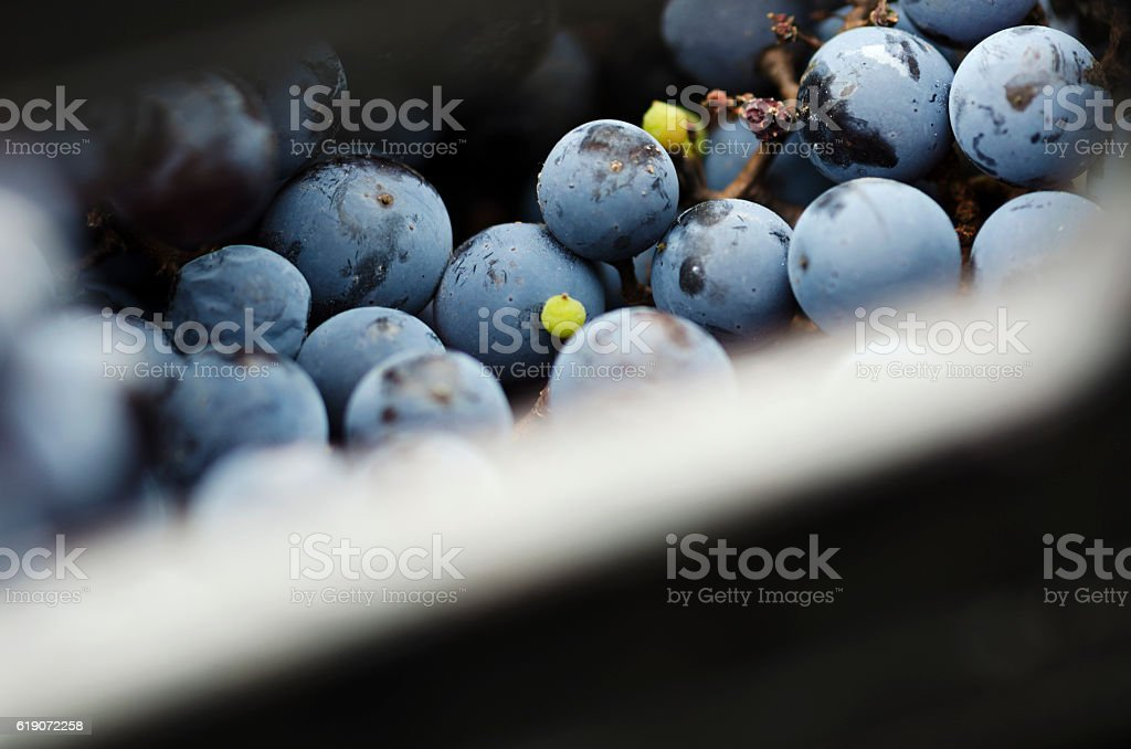 Part of crate with grapes stock photo