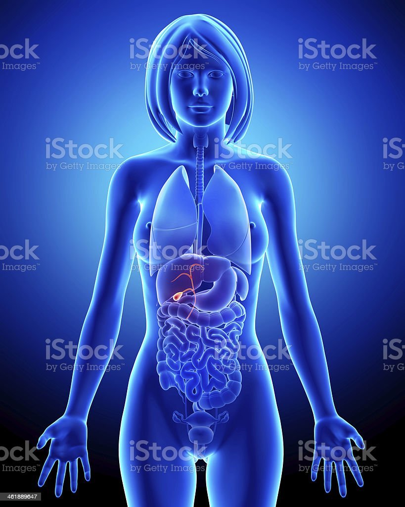 Part of Female biliary anatomy in blue x-ray stock photo