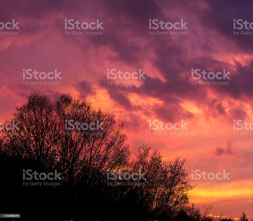 Part of forest with sunset stock photo