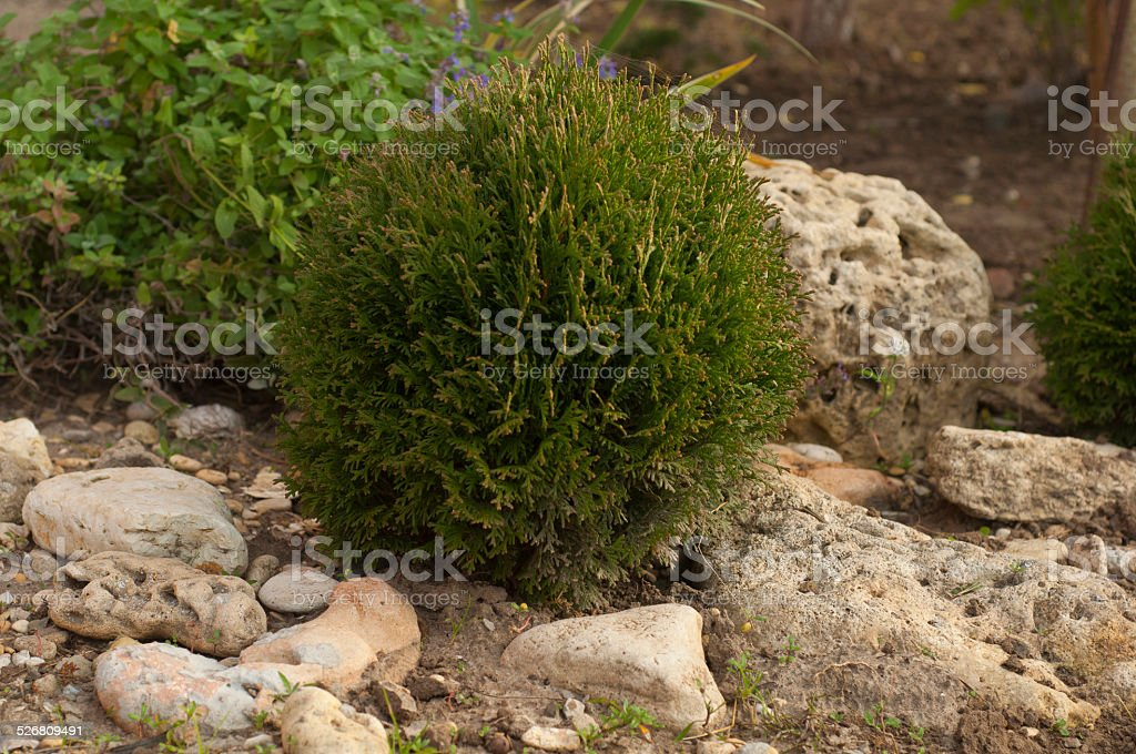 part of the garden with a spherical Tusi and stones stock photo