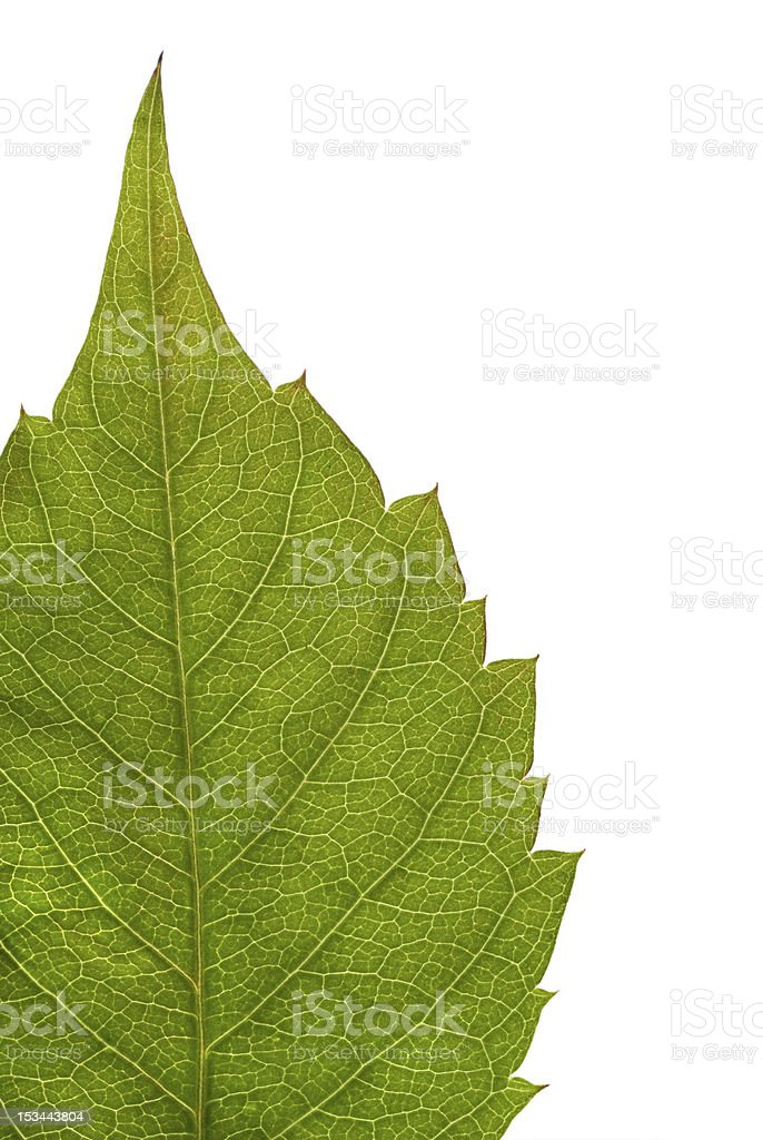 Part of the green leaf royalty-free stock photo