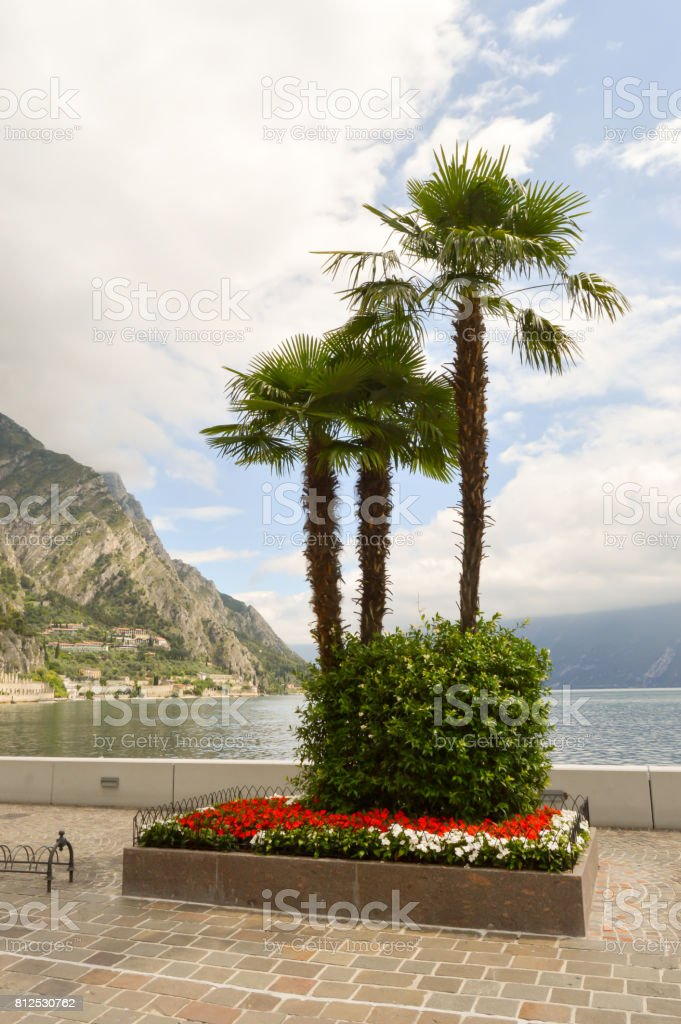 Parterre of palm trees stock photo