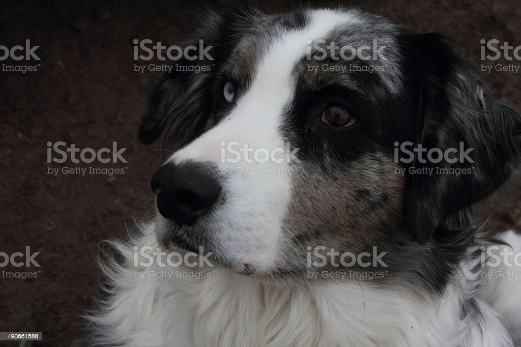 Partial profile of dog's face stock photo