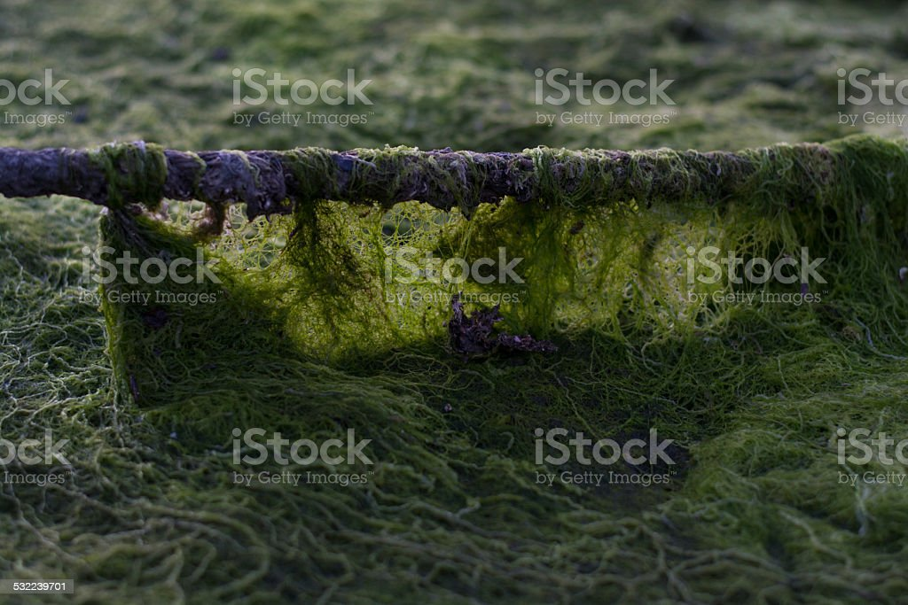 Partial rope covered in algae stock photo