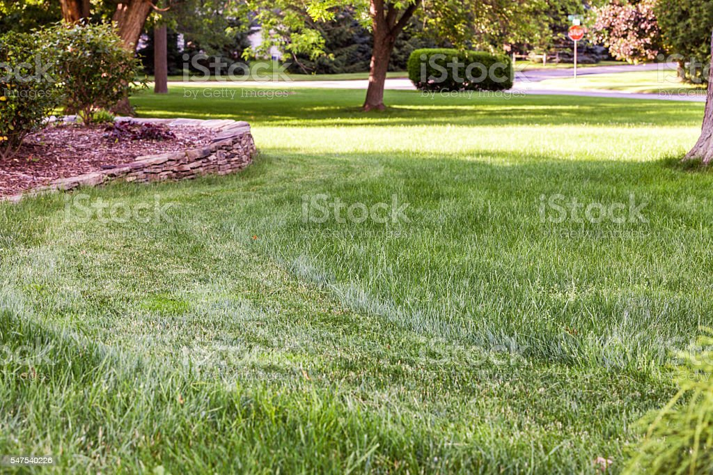 Partially Completed Lawn Mowing Front Yard Grass Cutting stock photo