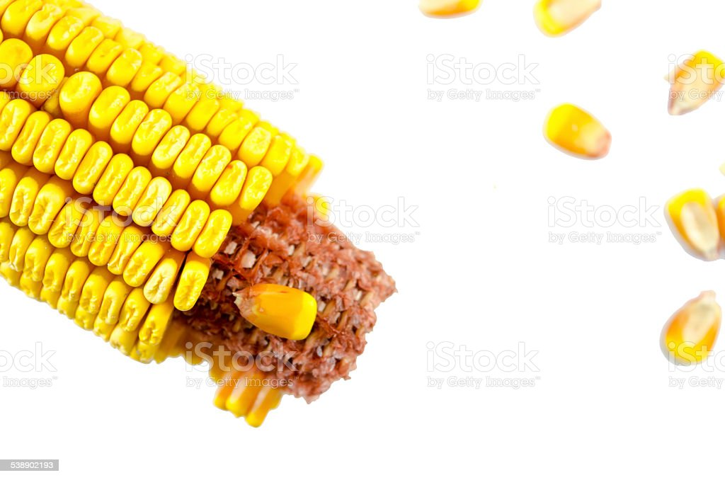 Partially crumbled corn and corn grains isolated royalty-free stock photo