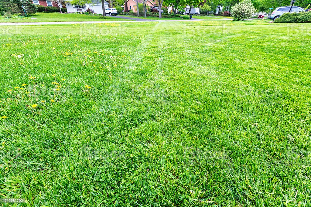 Partially Mowed Suburban Home Front Yard Lawn Grass stock photo