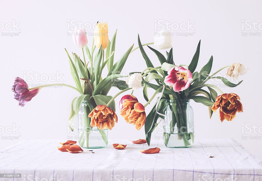Partially wilted tulips stock photo