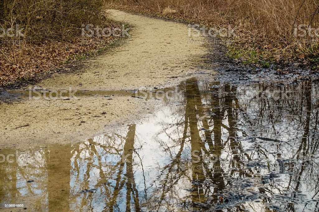 Partly flooded woodland trail stock photo