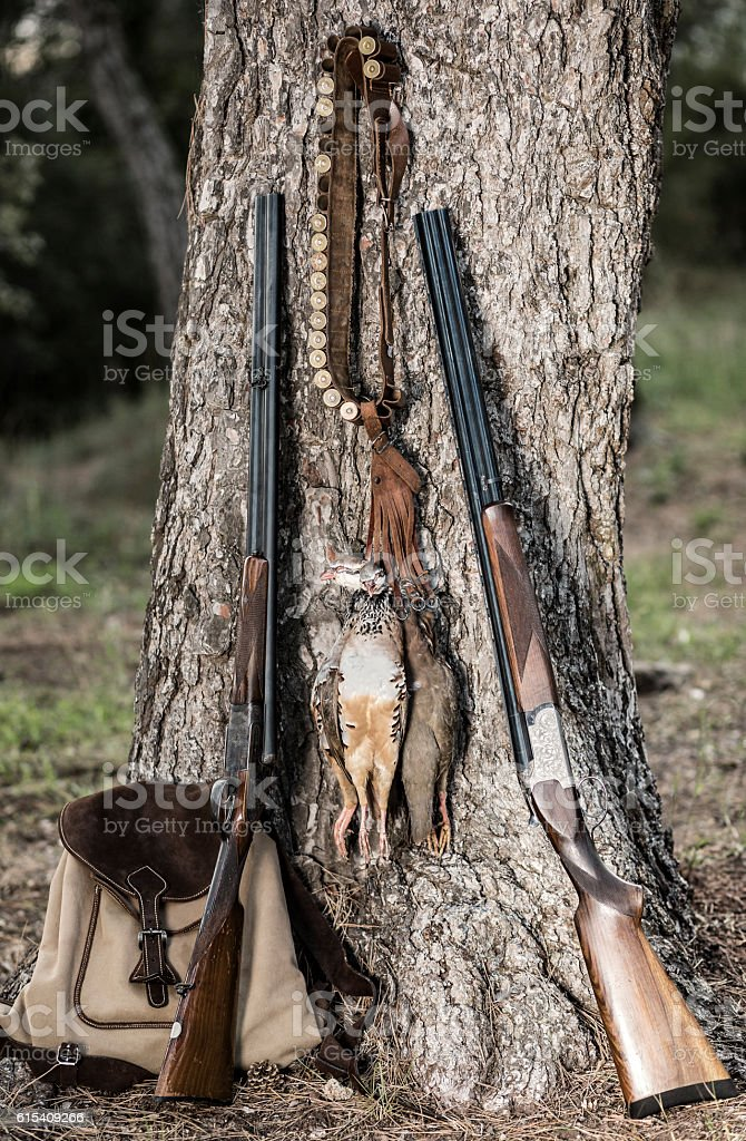 Partridge bird hunting stock photo