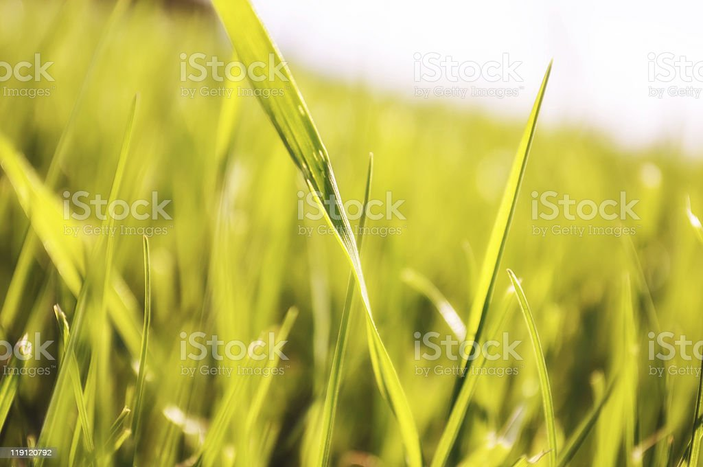 parts of green grass royalty-free stock photo