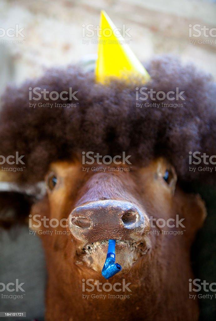 Party Animal stock photo