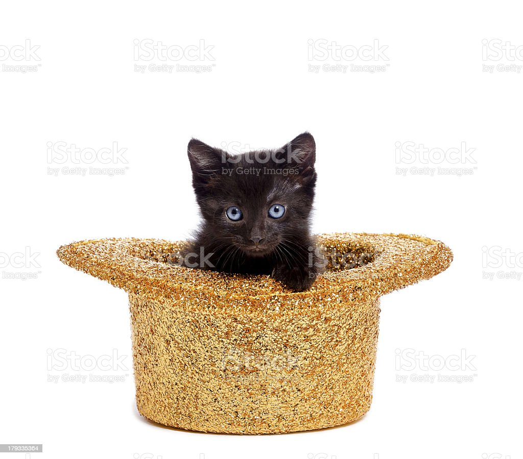 Party Animal-Cat in a Hat stock photo