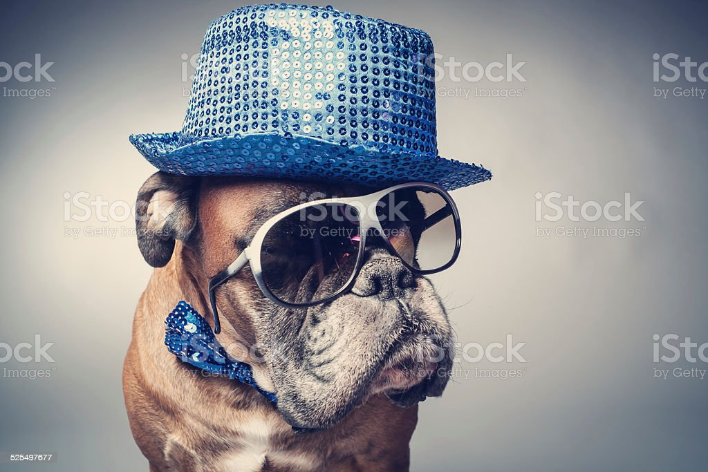 Boxer dog wearing party hat and sunglasses