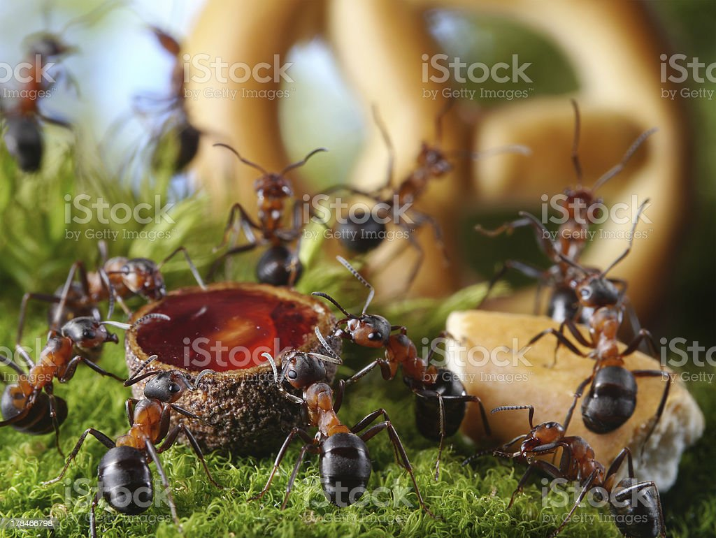 party in anthill stock photo