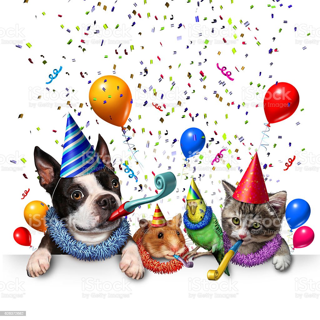 Party Pet Celebration stock photo