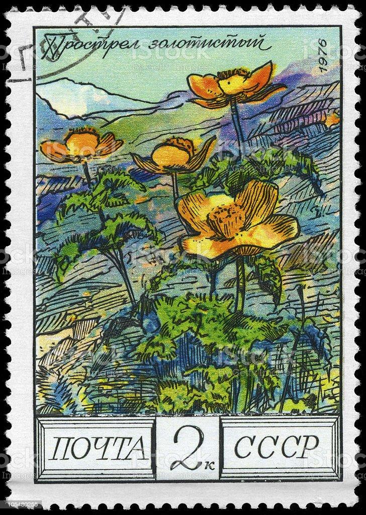 Pasqueflower royalty-free stock photo