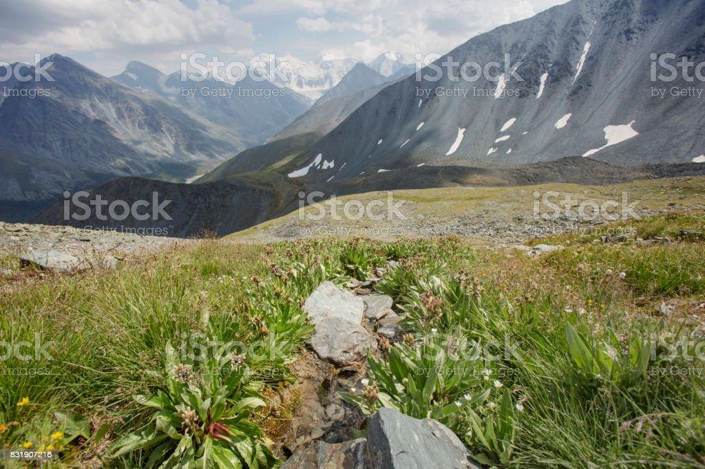 Pass Karaturek. Beluha Mountain, Altai stock photo