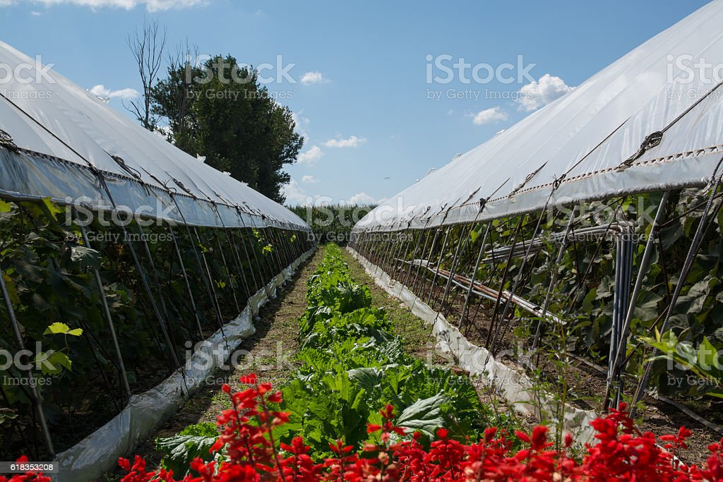 Passage between two greenhouses stock photo