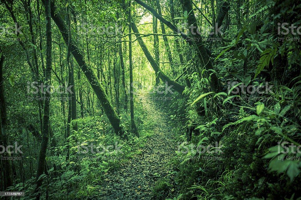Passage Through Green Jungle, Borneo Island royalty-free stock photo