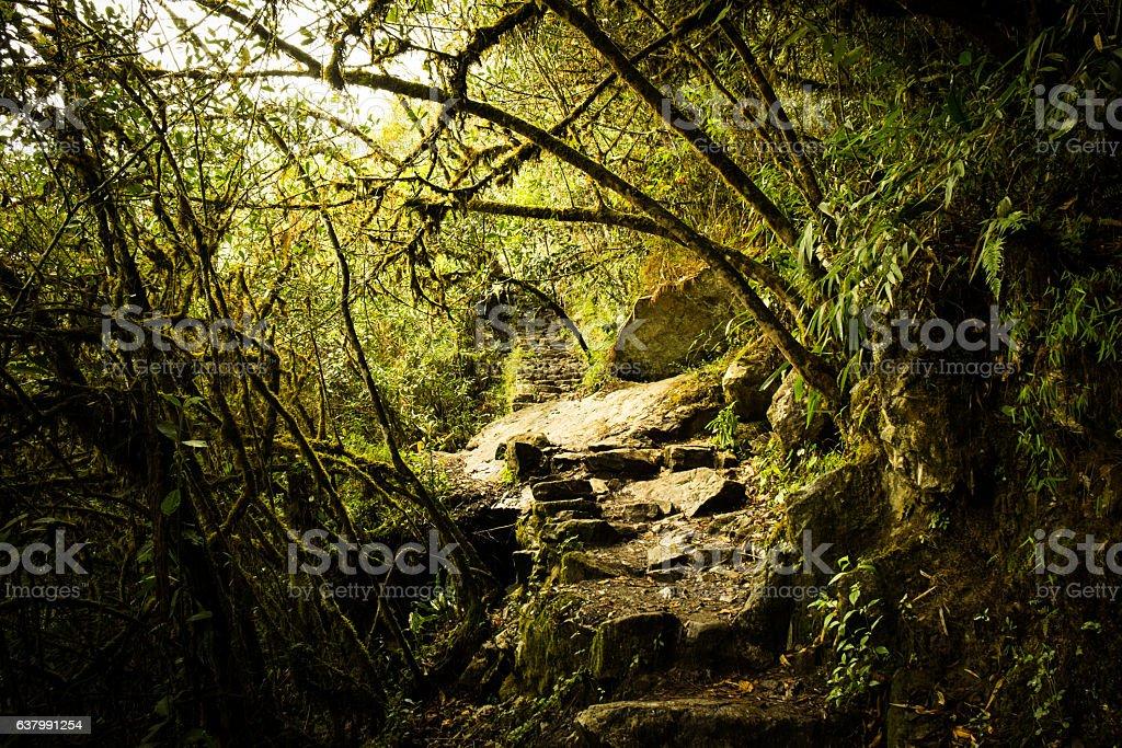 Passage Through Green Jungle stock photo