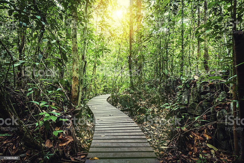 Passage Through the Jungle, Borneo Island stock photo