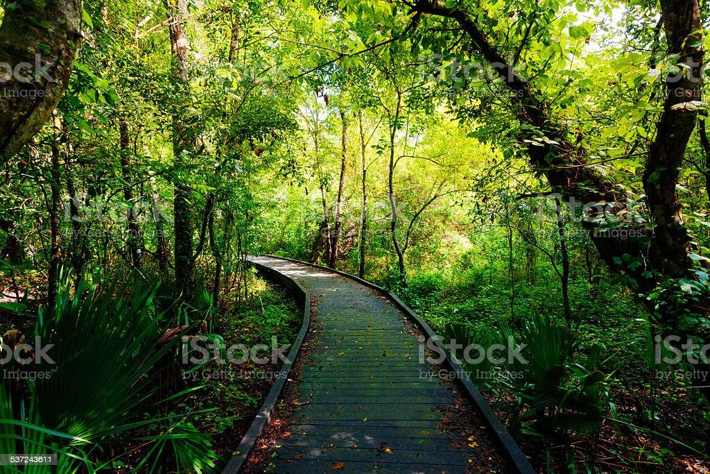 Passage Through the Jungle, Rainforest stock photo